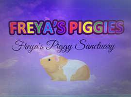 Guinea pig sanctuary