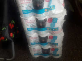 wilko cat food for sale