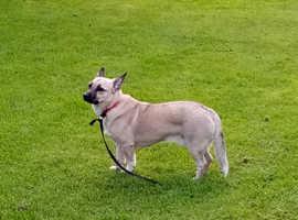 Super little dog for sale