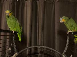 2 bird for sale