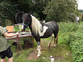 Hi I'm looking to put my dartmoor on loan as a companion in dorset /somerset area