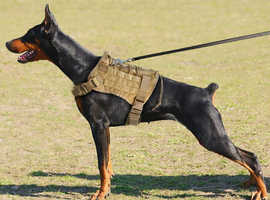 Military K9 Water Resistant Harness
