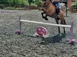 Super fun 13.2hh dun pony