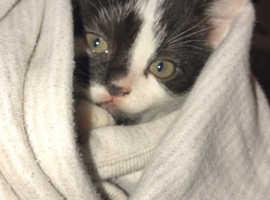 Kitten 9weeks