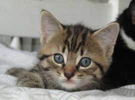 Stunning kittens