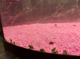3 xAssassin snails (pest snails eaters)