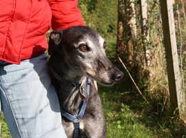 Home Dog Boarding, Dog Walking and Small Animal Boarding too