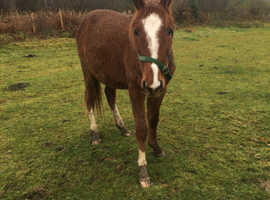 Adorable 3 year old gelding with bags of potential