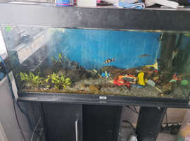 3 ft fish tank and selection of fish