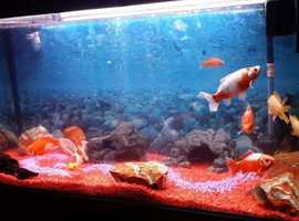 Fish Tank 400 l . 12 gold fish and all accesories included