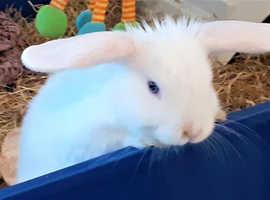 Cute frindly white Rabbit