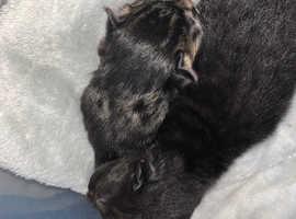 Kittens for sale west Midlands