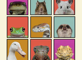 Set of 9 Framed Artworks Animal Pop Art Portrait Photography Print