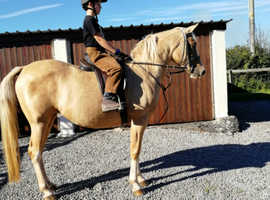 Wanted in foal 2020 rideable mare
