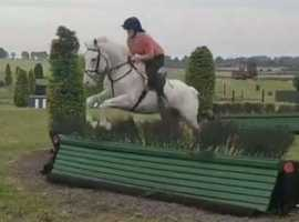 Talented small horse