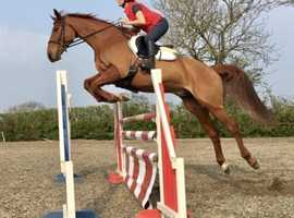 Super Jumping Horse