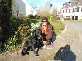 Dog walker, dog sitter