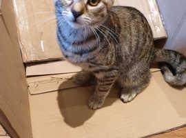 Female kitten 4 1/2 months
