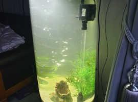 132L Oval Column Black Gloss Fish Tank + Fish