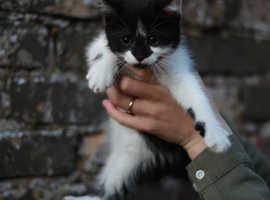 Fluffy Cute Kittens