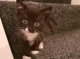 Black and white kittens female