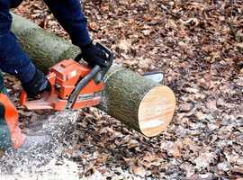 Tree Surgeon and Removalists