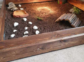 Horsefield tortoise and table