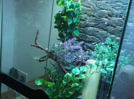 4 tokay geckos and set up.