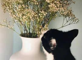 Lovely Kitty, Seeks Forever Home