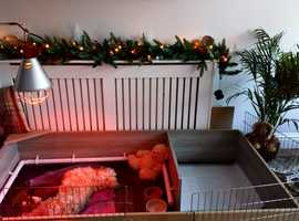 puppy whelping box including heat lamp, pig rail with fixings, caging for play area, lino flooring
