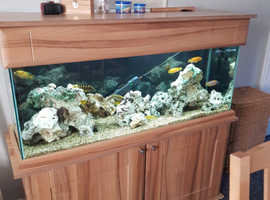 4ft fish tank with Malawi's