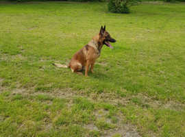 Dog home boarding and training
