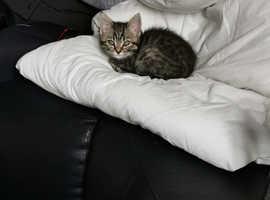 Kitten 3 months old