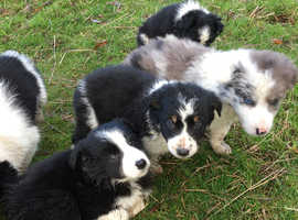 Pups now ready to go