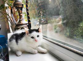 2 little chunky kittens