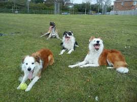 Dog Minder & walker Lydiate & Maghull