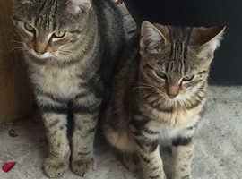 2 Gorgeous cats