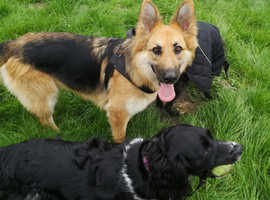 Professional Dog Walking Team.  Spaces available in Elland and Calderdale