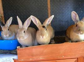 beautiful rabbits