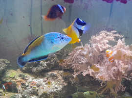 Marine Fish For Sale (SOLD)