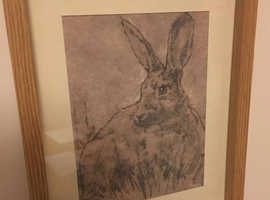 Hare pictures