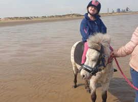 9hh lead rain/first pony