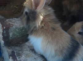 Gorgeous baby bunny rabbits