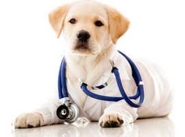 K9 Service UK - Canine Ovulation Progesterone Testing - £30