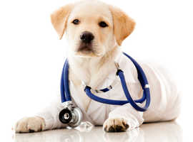 K9 Service UK - Microchipping only £10 per dog