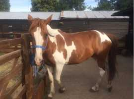 Part loan/Share of 14'3 mare