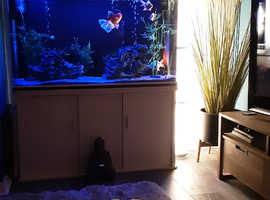 3 catfish free to good home