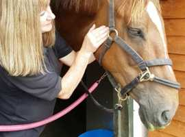 Equine Bodywork, Physiotherapy, Craniosacral and Myofascial Re;ease Therapy