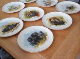 David Shepherd Wildlife Collection Wedgewood China Plates