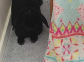 Loveable bunny needs a new home